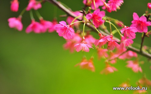 Цветочное настроение весна-лето 2012