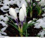 Зима-весна и я
