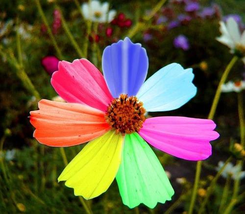 Какие цвета цветик семицветик