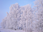 Зимняя сказка...