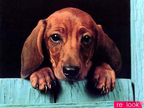 Собачьи дела: четвероногий символ года