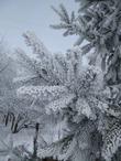 Маленькой елочке не холодно зимой))