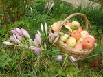 Молодильные яблочки и не только