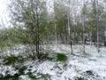 Снег на зеленых листьях - причуды внезапной зимы...