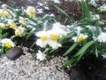 Цветы и снег - они могут быть вместе...