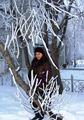 Зимнее убранство деревьев.