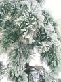 Ледяные сосновые лапы