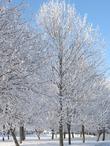 Околдованные снегом