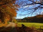 Осень … Очей очарованье!