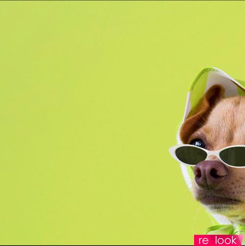 Мохнатый топ-блогер Boobie Billie: «Я не ношу одежду для собак»